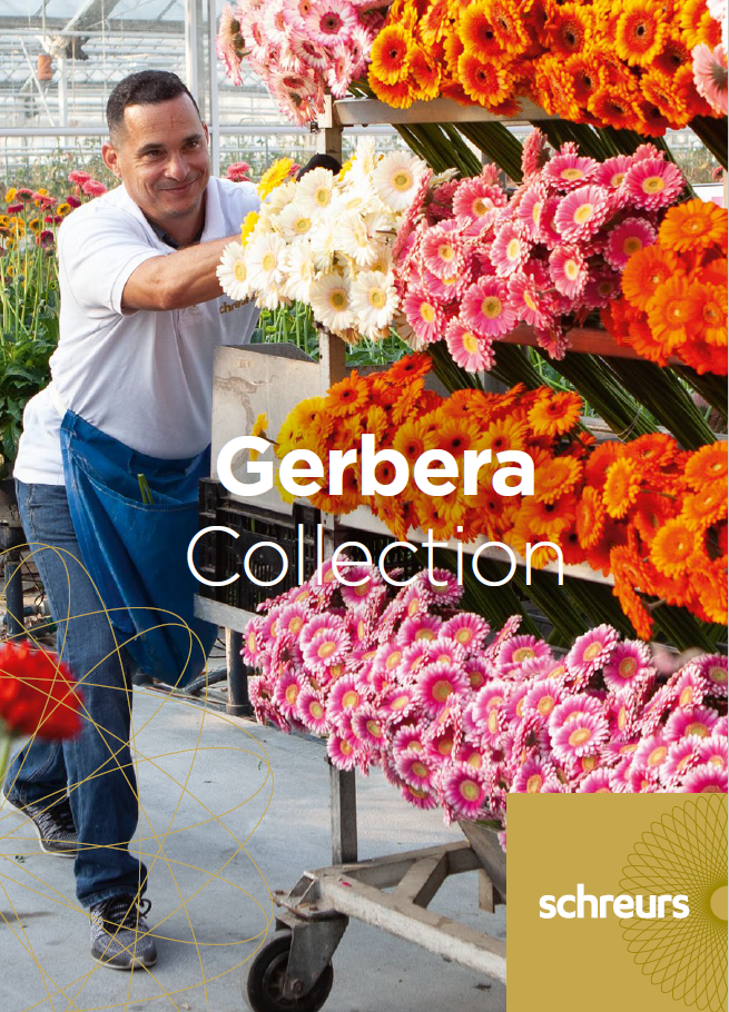 Order your gerbera catalogue for 2022!